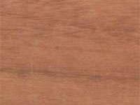 afromosia exotic wood image